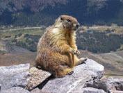 Marmot 2